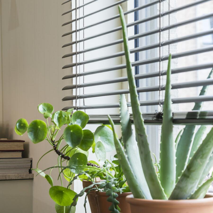 Plantes grasses et stores vénitiens heytens vtwonen