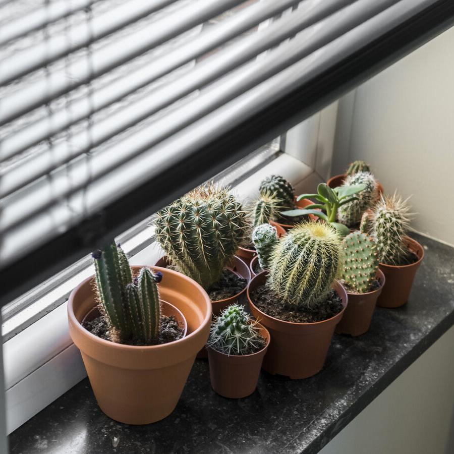 Cactus et stores vénitiens heytens vtwonen